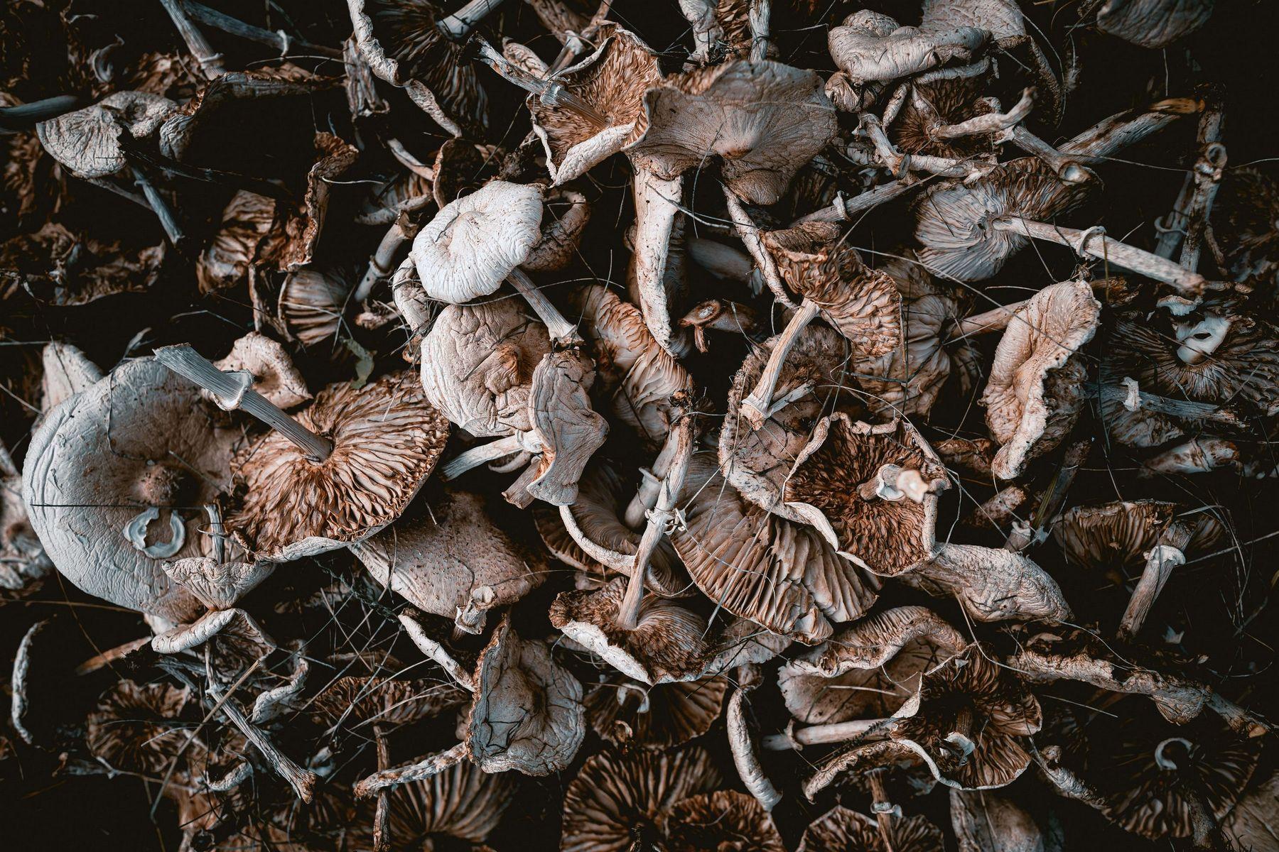 8 razloga zašto gljive trebaju biti dio SVAKODNEVNOG jelovnika