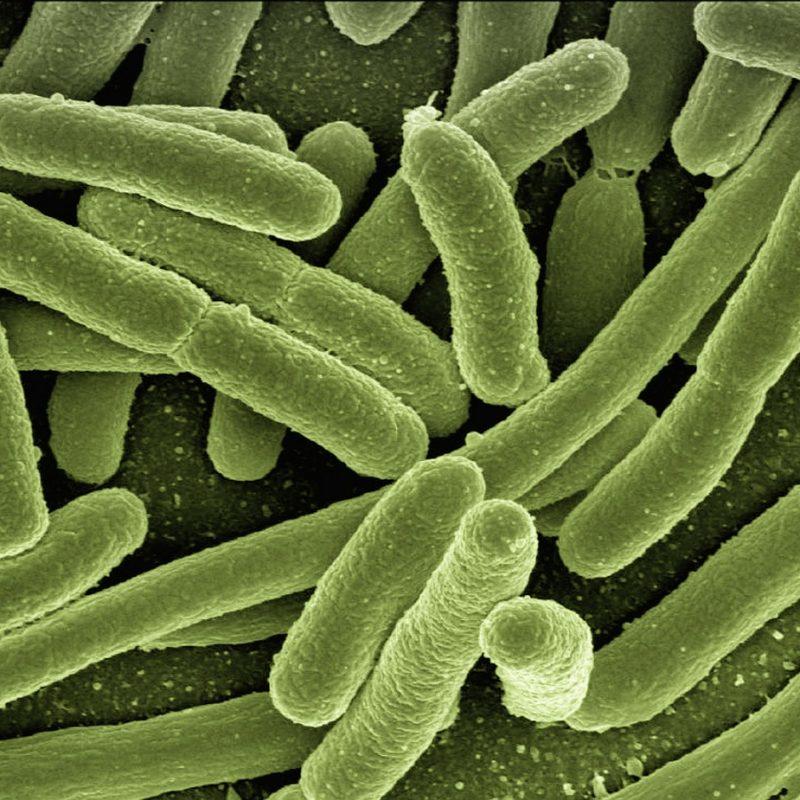 Escherichia Coli- 9 terapija koje NE uključuju antibiotik